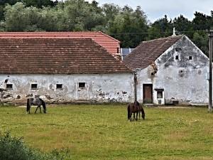 horses-98161_640